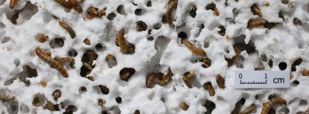 Un gusano podría ser la solución al problema de la basura plástica