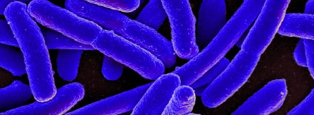 No, no tenemos más bacterias que células en nuestro organismo