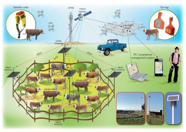cattle-watch 2