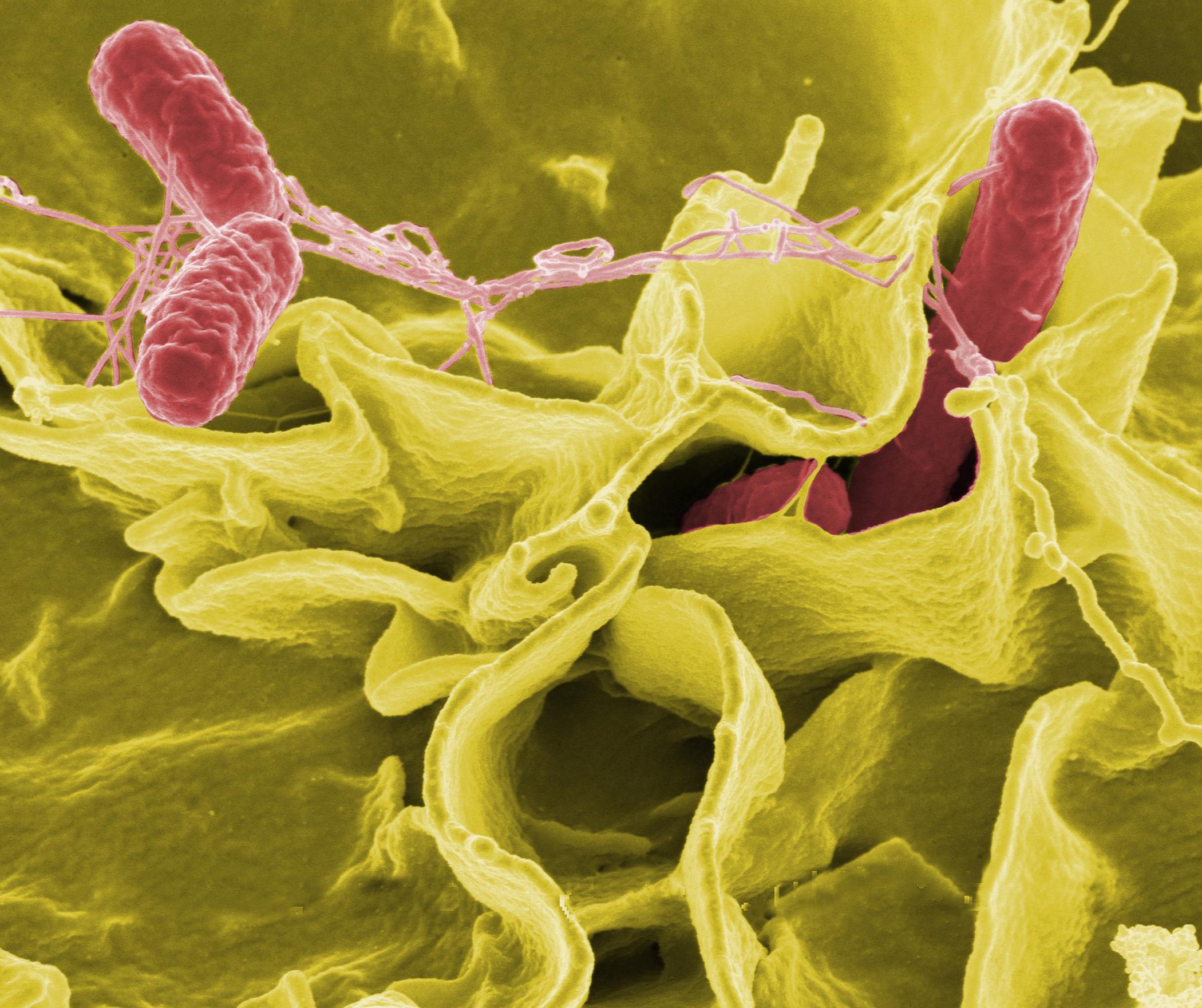 """Las bacterias que sacaron a la luz la """"Capilla Sixtina"""" valenciana"""