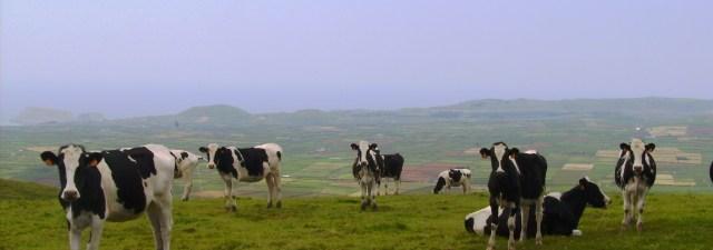 Crean cartílago en el laboratorio a partir de células de vaca