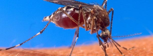 """Diez preguntas sobre el zika, la nueva """"emergencia sanitaria global"""""""