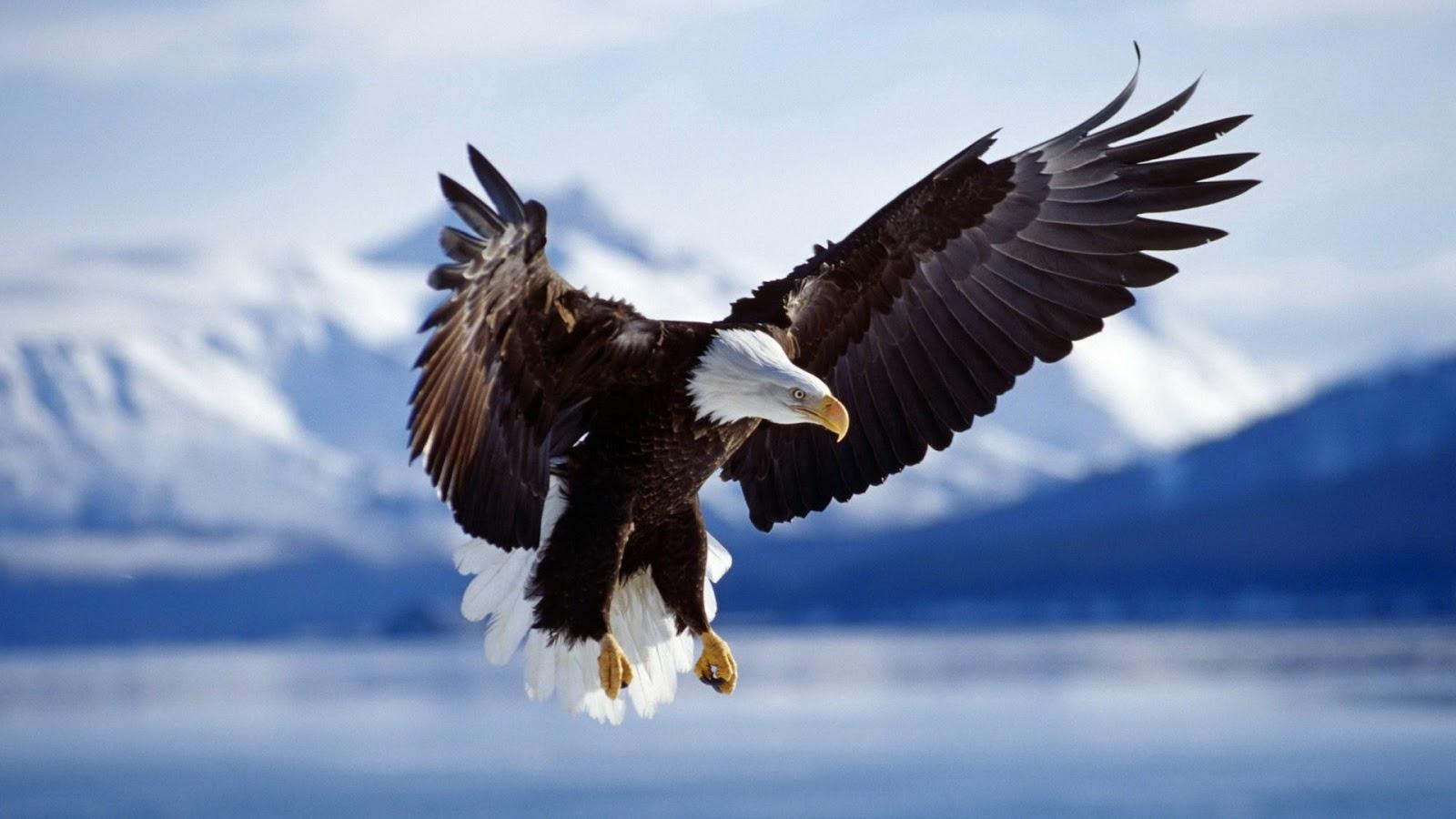 Las águilas, los soldados del futuro