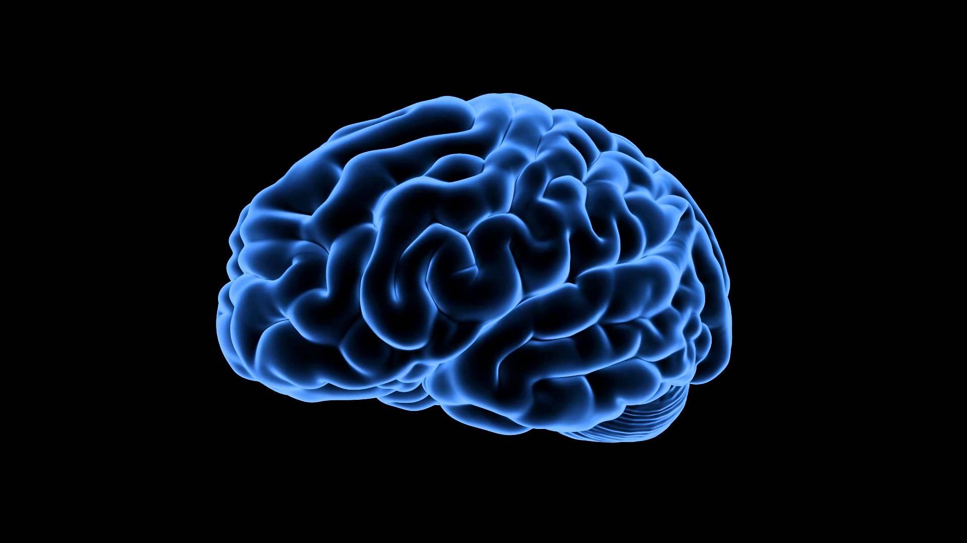 """La impresión 3D ayuda a modelizar la formación de los """"giros"""" del cerebro"""