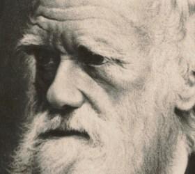 Las cinco especies que Darwin no consiguió descubrir en Azores ni Madeira