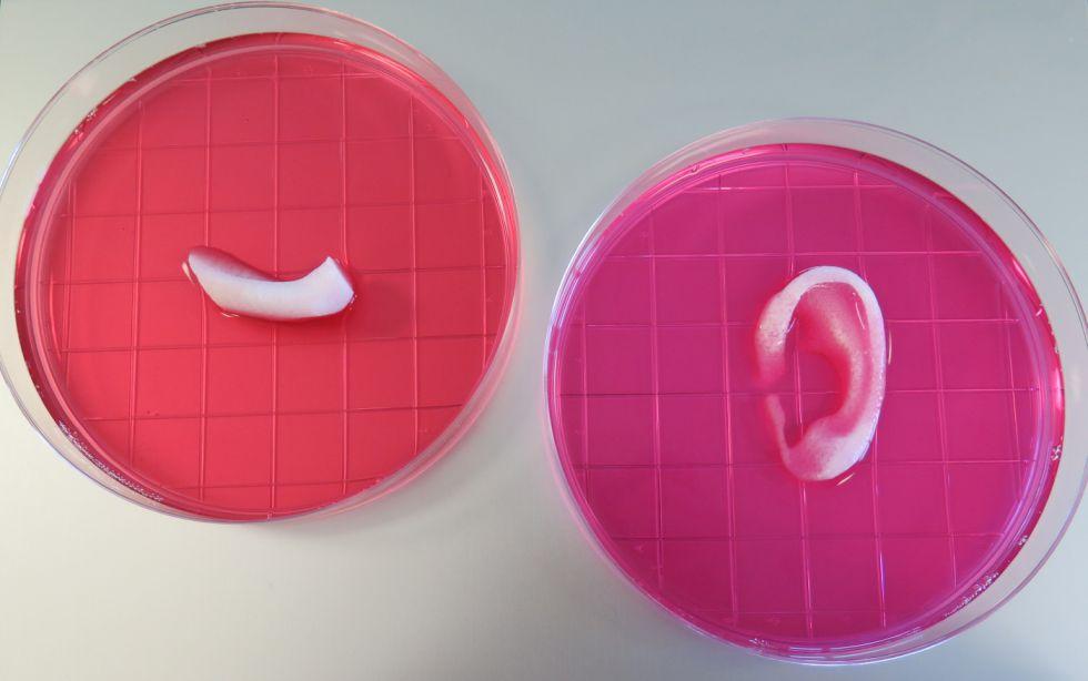 Cómo la impresión 3D puede ayudar al trasplante de órganos