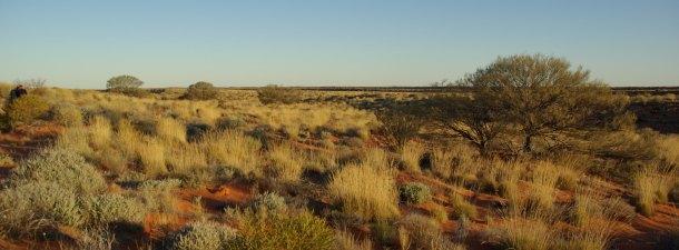 Una planta australiana es la clave para obtener preservativos más resistentes y finos