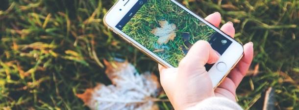 La aplicación que identifica plantas
