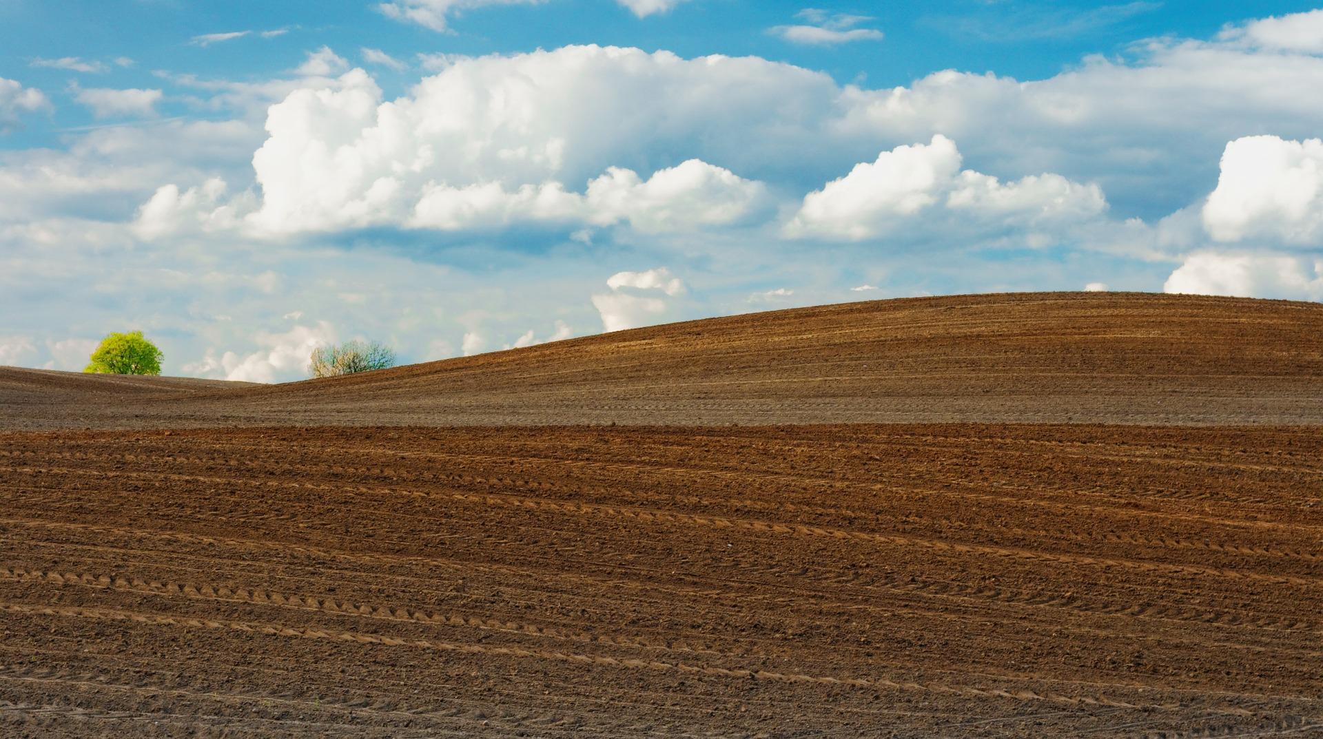 ¿Cómo se innova en el sector de la industria agroalimentaria?