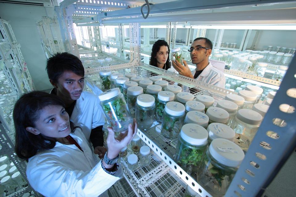 Carne cultivada: de criar animales a crear carne en un laboratorio