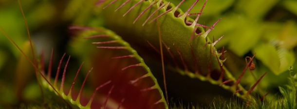 Los secretos de las plantas carnívoras, atrapados por la ciencia