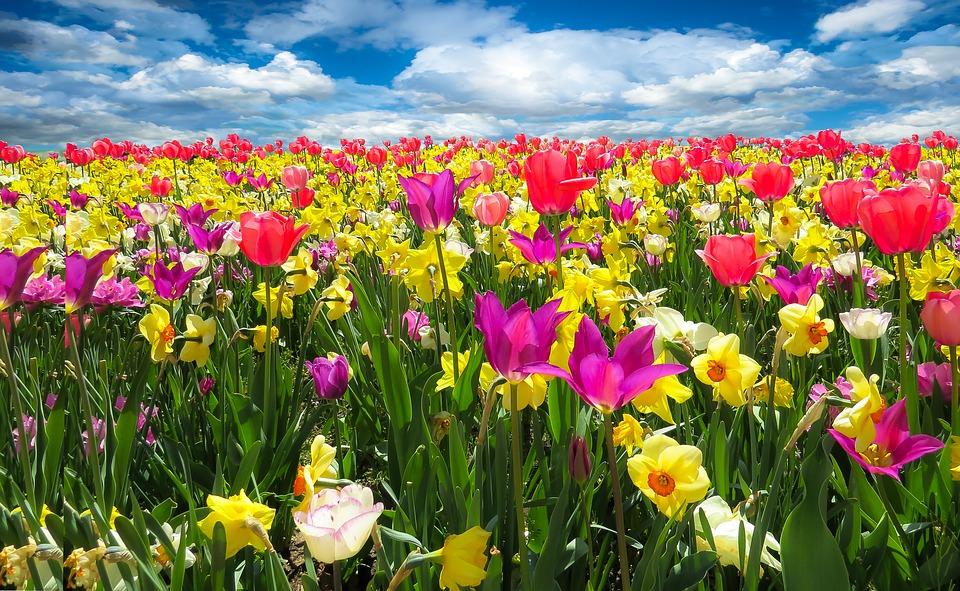 ¿Alergia primaveral? Os presentamos una selección de apps para combatir este problema