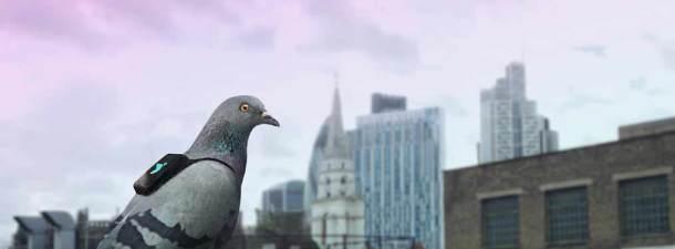 Cómo medir y evitar la contaminación a través de las aves