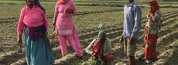 Cómo India ha plantado 50 millones de árboles en 24 horas