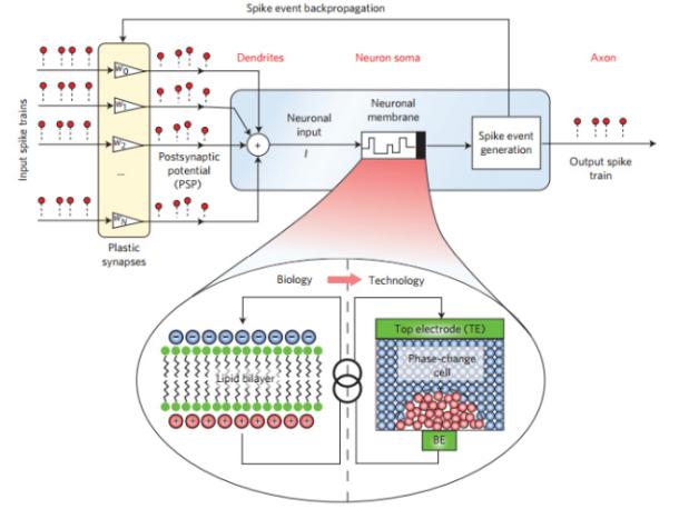 IBM neurona