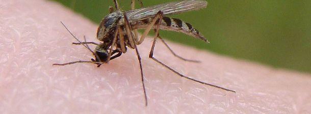 ¿Por qué los mosquitos pican a unas personas y a otras no?