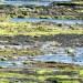 Sintetizan petróleo a partir de algas en un proceso de 20 minutos