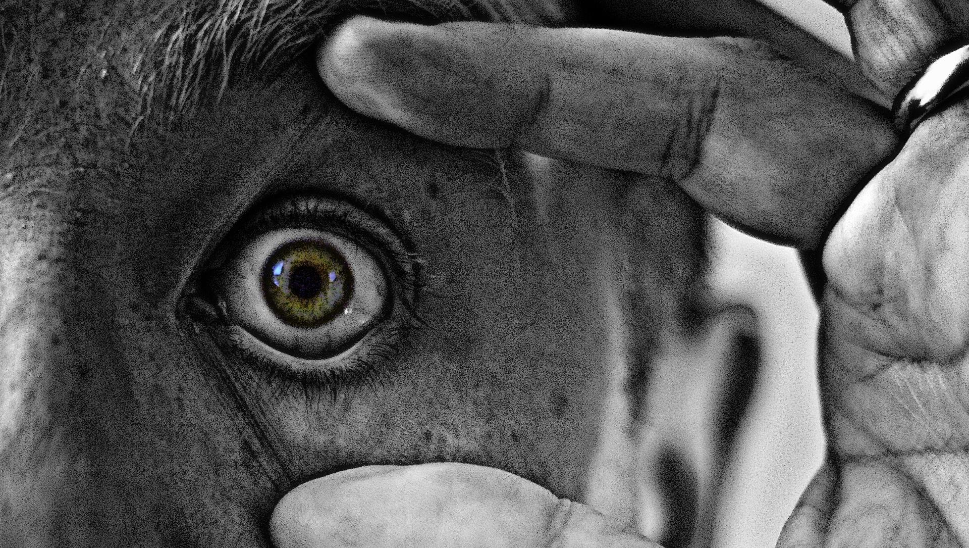 Así es como actúa tu cerebro cuando reconoce caras