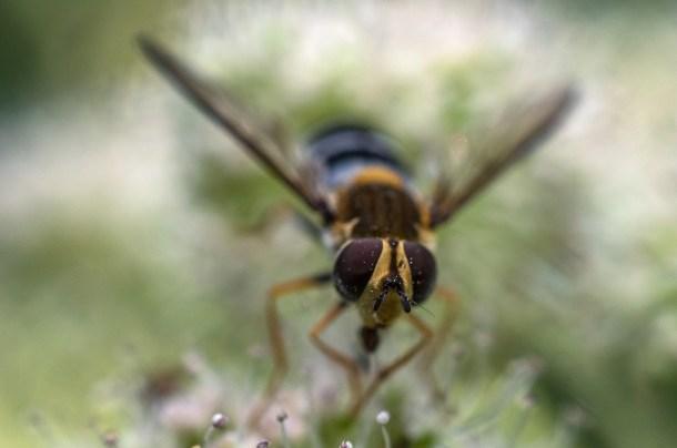 Migración de insectos