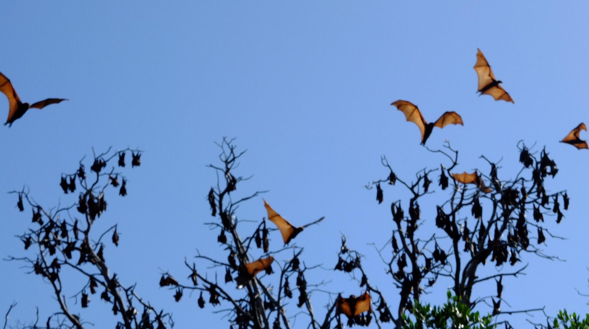 Inteligencia artificial para descifrar el código de los murciélagos
