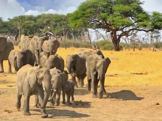Elefantes con drones