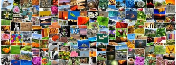Organiza tus recuerdos con estas herramientas para etiquetar tus fotos