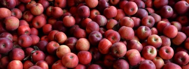 Este robot recolector de manzanas muestra el futuro de la agricultura