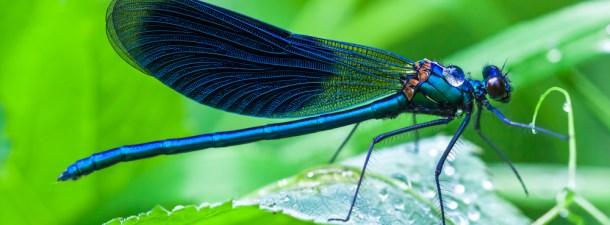 La libélula sobrevuela el mundo de los drones