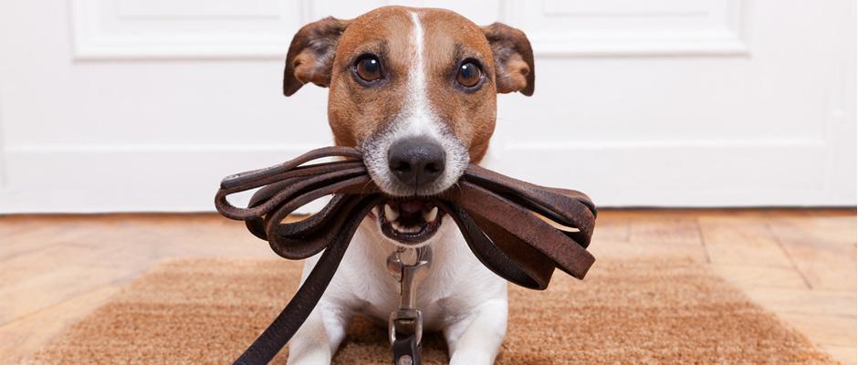Collares inteligentes para mascotas despistadas
