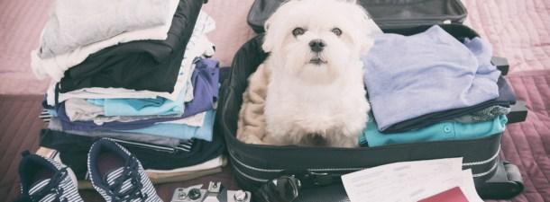 Apps que hacen más fáciles las vacaciones con mascotas