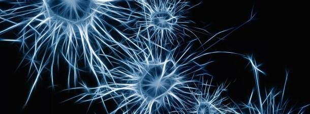 El buen funcionamiento del metabolismo de azúcares en el cerebro puede ralentizar el Alzheimer