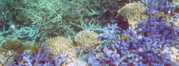 Cómo los drones monitorizan la Gran Barrera de Coral
