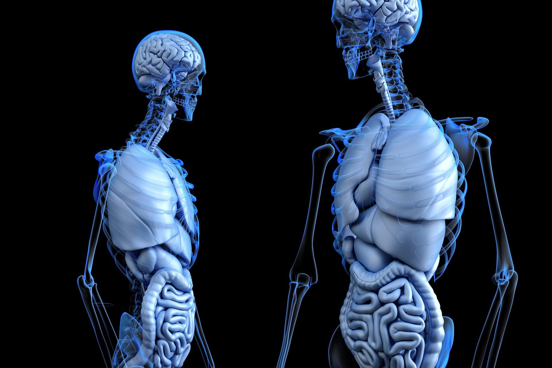 Una nueva cámara puede ver dentro del cuerpo humano