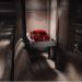 Elon Musk muestra el avance de un túnel cavado por The Boring Company