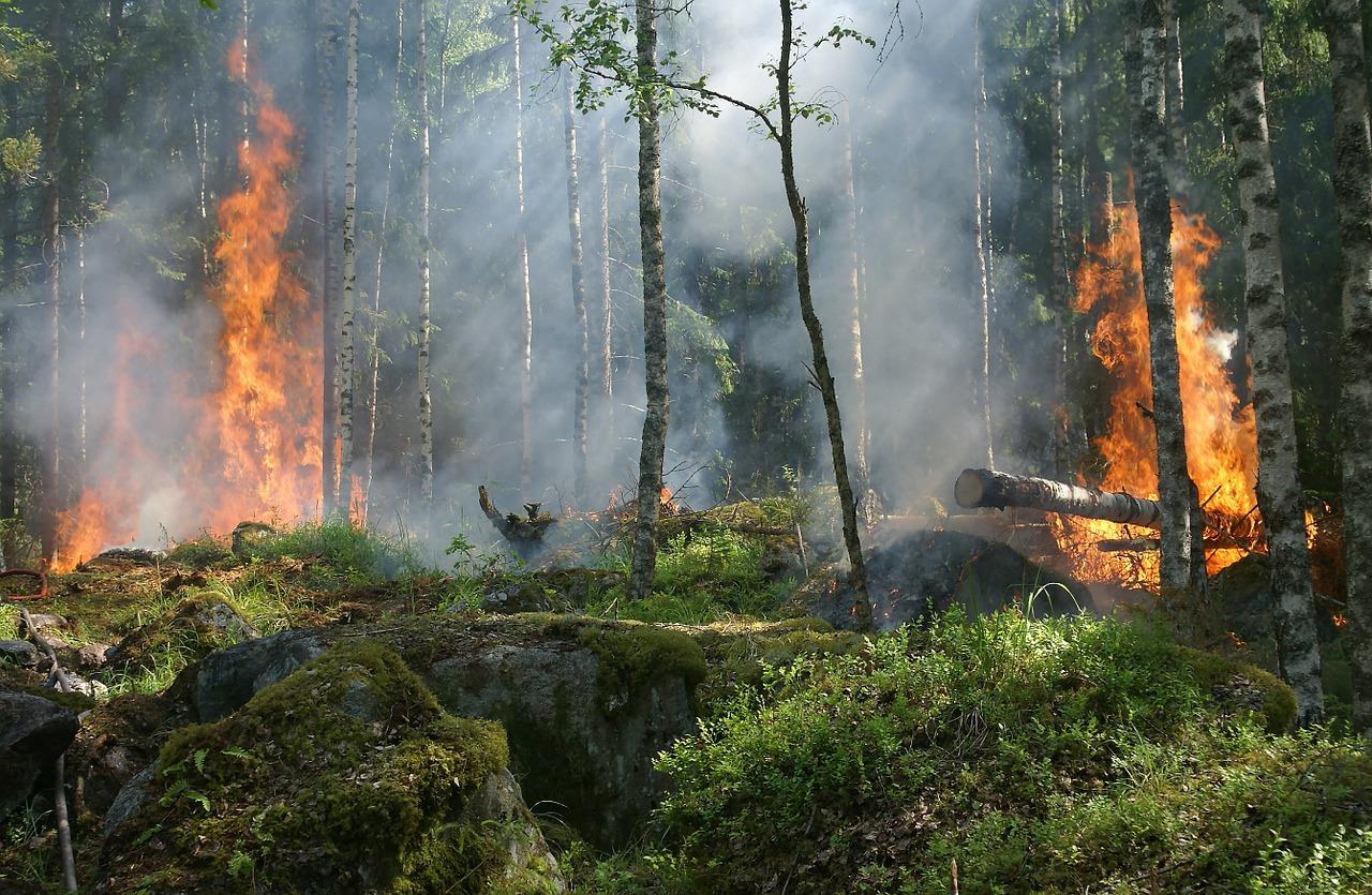 Drones para prevenir y controlar incendios forestales