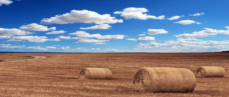 Este sistema de agricultura protegerá a los cultivos de la sequía