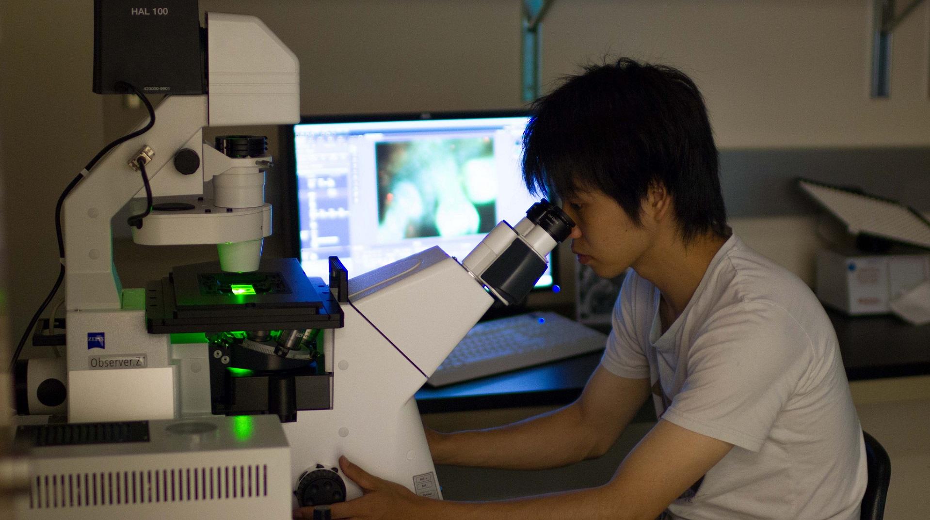 Estos nanorobots combaten el cáncer selectivamente dentro del cuerpo