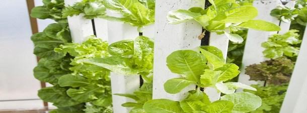 La agricultura vertical ya se cultiva con luz natural