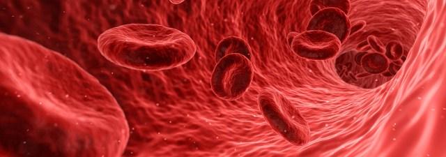 ¿Cuánto viven nuestras células?