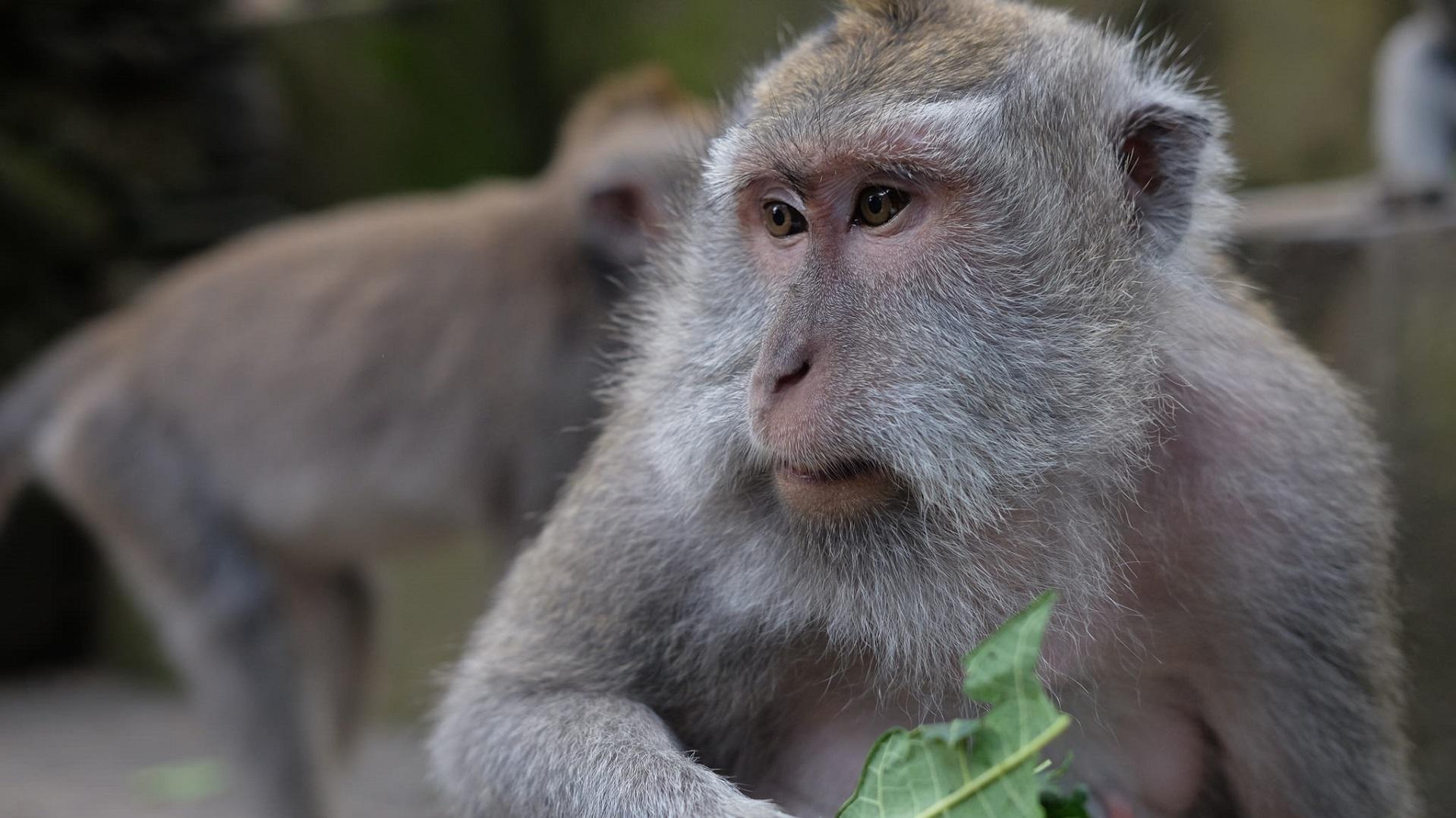 China toma la delantera en clonación: su último éxito son dos primates