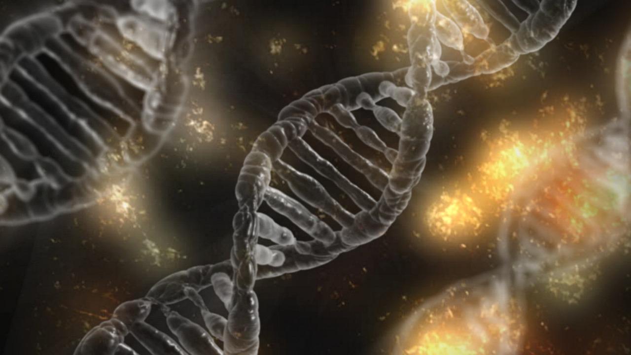 En busca de la vaca perfecta: el futuro de la genética