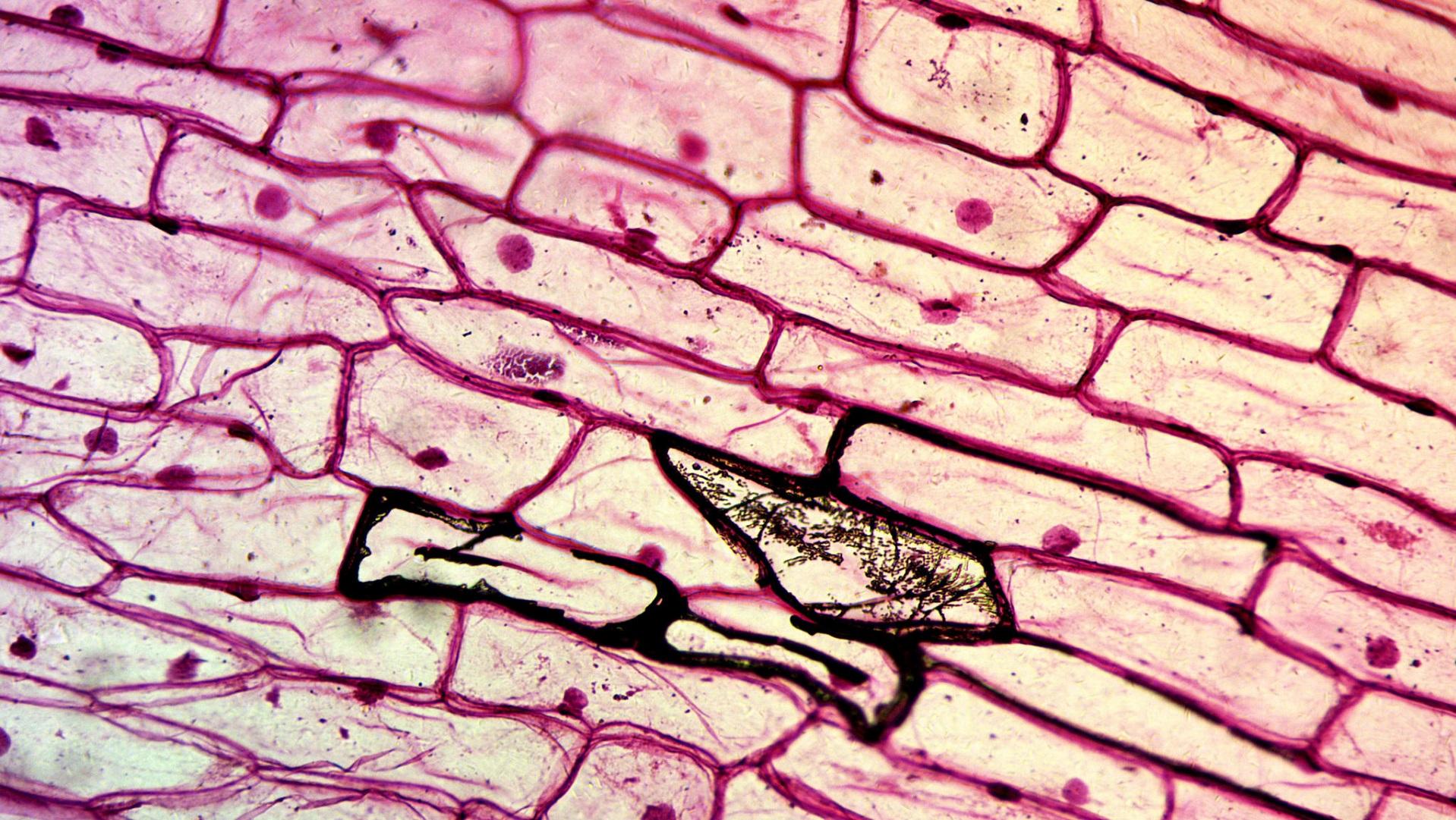 Con este accesorio tu smartphone se puede convertir en un microscopio