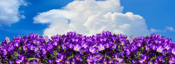 ¿Cómo nos afecta a nivel biológico la llegada de la primavera?