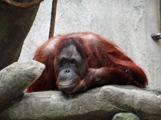 Tráfico animal Indonesia