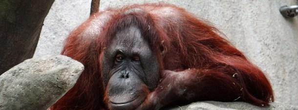 Tecnología de vanguardia para combatir el tráfico animal en Indonesia