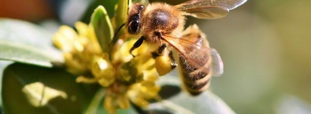 La inteligencia artificial llega a las colmenas de abejas
