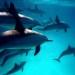 El Día Mundial de los Océanos insiste en la lucha contra los plásticos