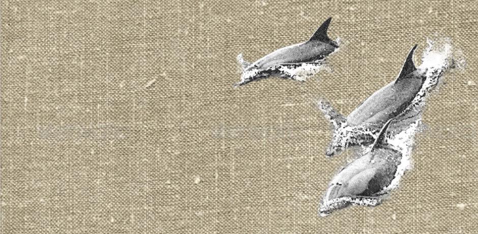 Los delfines se convierten en la solución definitiva para la enfermedad del buzo