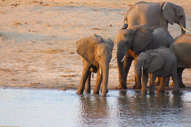 conservación de los animales
