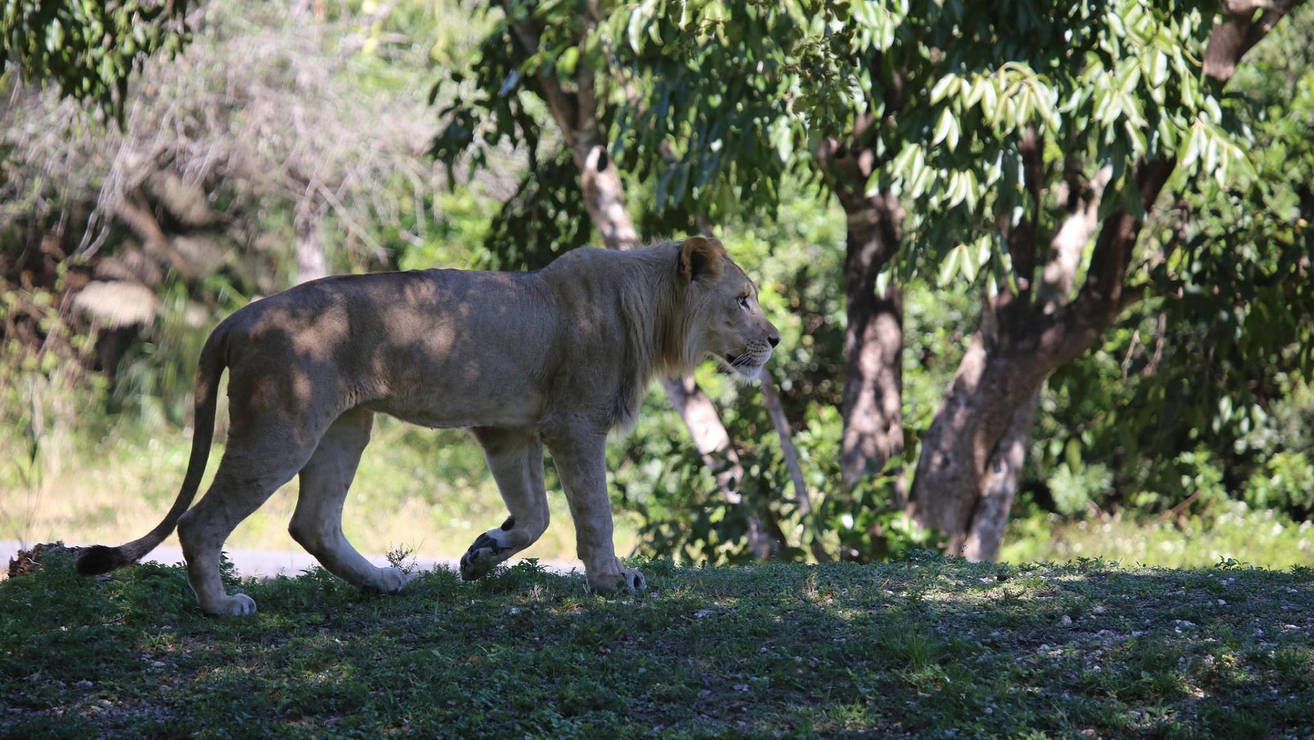 Cómo la inteligencia artificial puede apoyar la conservación de los animales